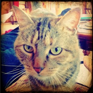 kingzett cat